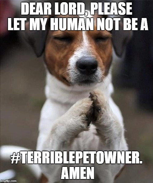 #TerriblePetOwner | DEAR LORD, PLEASE LET MY HUMAN NOT BE A #TERRIBLEPETOWNER. AMEN | image tagged in pet prayer | made w/ Imgflip meme maker