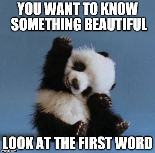 Panda | YOU WANT TO KNOW SOMETHING BEAUTIFUL LOOK AT THE FIRST WORD | image tagged in panda | made w/ Imgflip meme maker