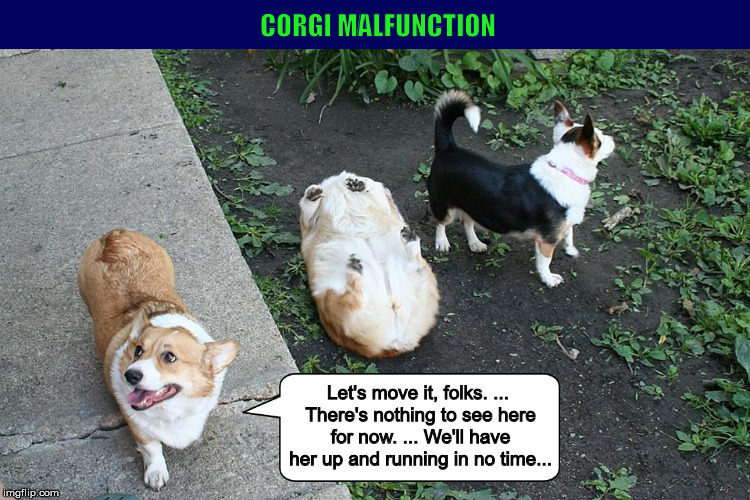 Corgi Malfunction (Revised) | image tagged in corgi,pembroke welsh corgi,dogs,corgi malfunction,funny,memes | made w/ Imgflip meme maker