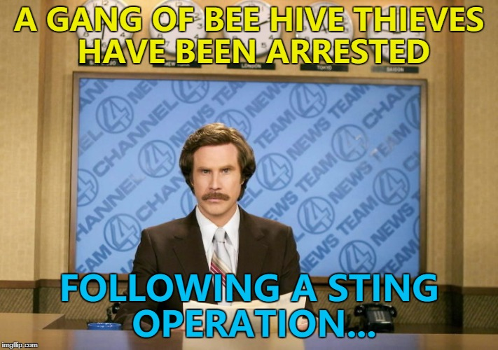 In truth it was more of a honey trap... :) | A GANG OF BEE HIVE THIEVES HAVE BEEN ARRESTED FOLLOWING A STING OPERATION... | image tagged in this just in,memes,bees,crime,animals | made w/ Imgflip meme maker