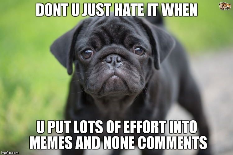 UUUUURGGH | DONT U JUST HATE IT WHEN U PUT LOTS OF EFFORT INTO MEMES AND NONE COMMENTS | image tagged in not a pug | made w/ Imgflip meme maker
