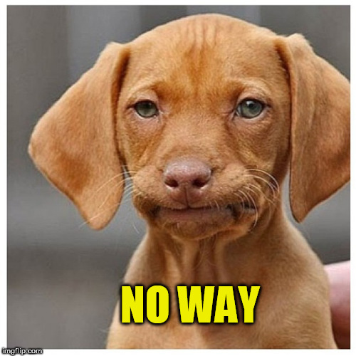 No way |  NO WAY | image tagged in no way,disappointed dog,disapproving dog,no way dog meme | made w/ Imgflip meme maker