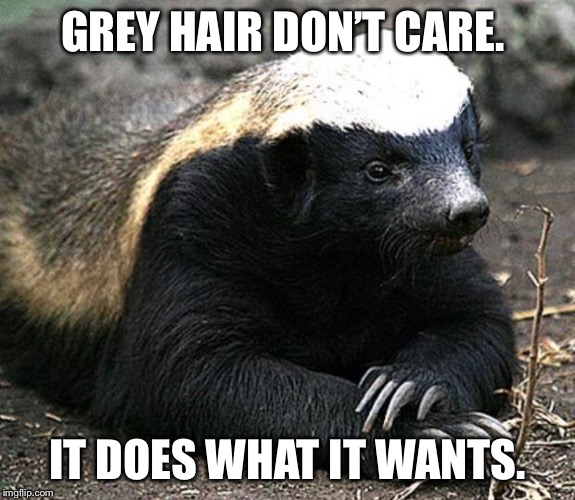 Honey badger | GREY HAIR DON'T CARE. IT DOES WHAT IT WANTS. | image tagged in honey badger | made w/ Imgflip meme maker