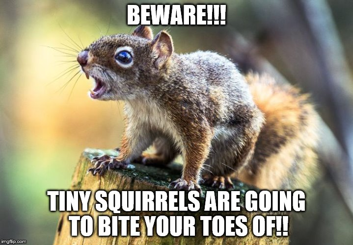 BEWARE!!! TINY SQUIRRELS ARE GOING TO BITE YOUR TOES OF!! | image tagged in squrrel | made w/ Imgflip meme maker
