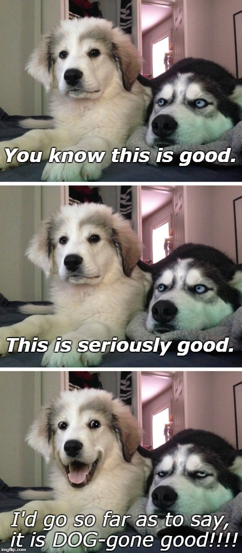 Bad pun dogs | You know this is good. I'd go so far as to say, it is DOG-gone good!!!! This is seriously good. | image tagged in bad pun dogs | made w/ Imgflip meme maker