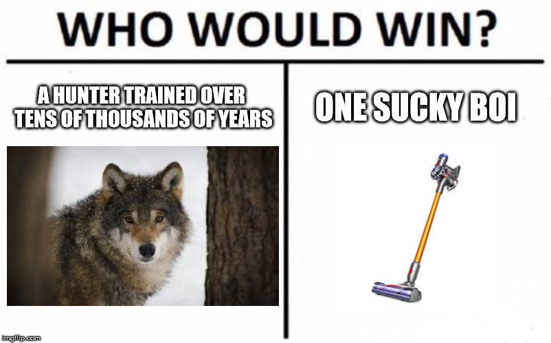 Who Would Win? Meme | A HUNTER TRAINED OVER TENS OF THOUSANDS OF YEARS ONE SUCKY BOI | image tagged in memes,who would win,wolf | made w/ Imgflip meme maker