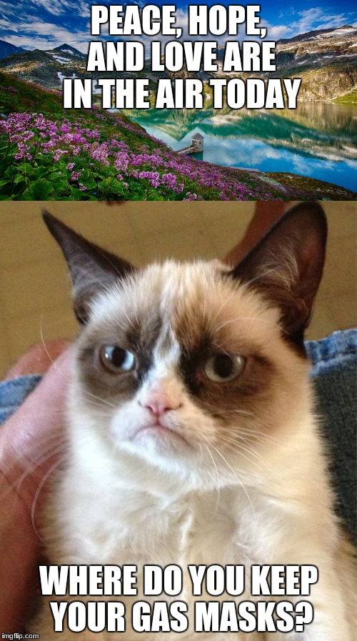 PEACE, HOPE, AND LOVE ARE IN THE AIR TODAY WHERE DO YOU KEEP YOUR GAS MASKS? | image tagged in peace,love,hope,grumpy cat | made w/ Imgflip meme maker