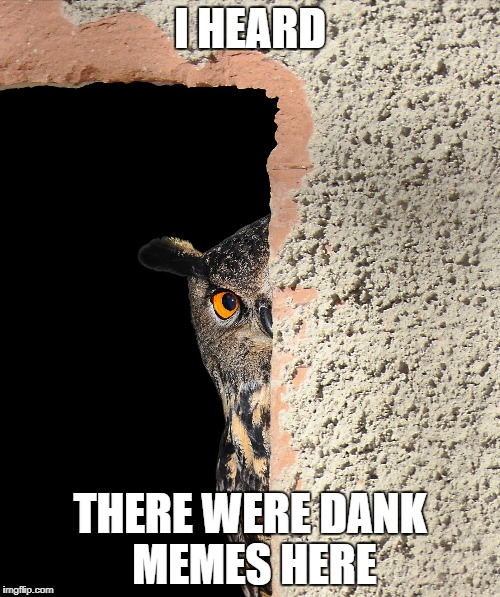 When you overhear your coworkers talking about dank memes | I HEARD THERE WERE DANK MEMES HERE | image tagged in meme,funny,laugh,dank memes | made w/ Imgflip meme maker