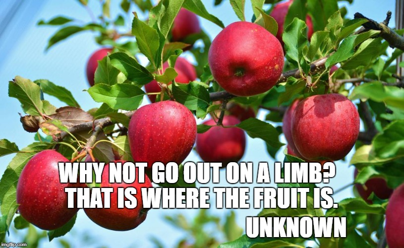 WHY NOT GO OUT ON A LIMB?  THAT IS WHERE THE FRUIT IS. UNKNOWN | image tagged in apples | made w/ Imgflip meme maker