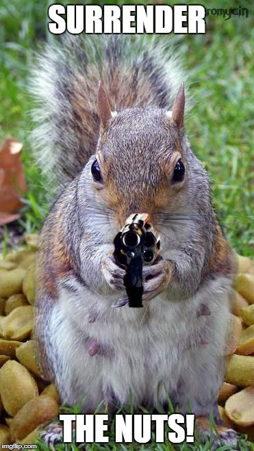aghh squirrels  | SURRENDER THE NUTS! | image tagged in funny squirrels with guns 5 | made w/ Imgflip meme maker