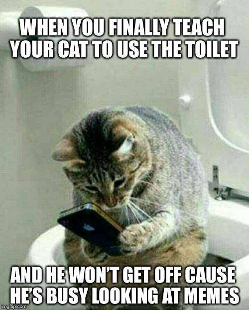 Cat-ass-trophy! | WHEN YOU FINALLY TEACH YOUR CAT TO USE THE TOILET AND HE WON'T GET OFF CAUSE HE'S BUSY LOOKING AT MEMES | image tagged in funny memes,funny cat memes,toilet humor | made w/ Imgflip meme maker