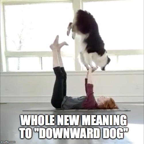 "New Meaning... | WHOLE NEW MEANING TO ""DOWNWARD DOG"" 