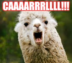 CAAAARRRLLLL!!! | image tagged in llama | made w/ Imgflip meme maker
