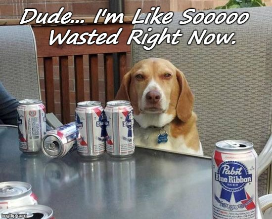 Dude... I'm Like Sooooo  Wasted Right Now. | image tagged in dog beer | made w/ Imgflip meme maker