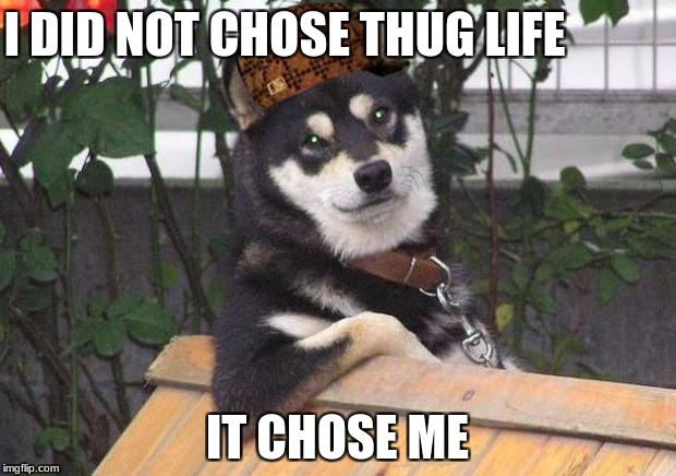 Cool dog | I DID NOT CHOSE THUG LIFE IT CHOSE ME | image tagged in cool dog,scumbag | made w/ Imgflip meme maker
