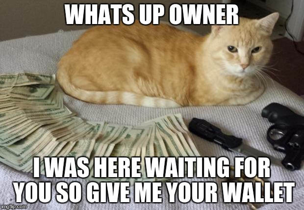 Thug life | WHATS UP OWNER I WAS HERE WAITING FOR YOU SO GIVE ME YOUR WALLET | image tagged in thug life | made w/ Imgflip meme maker