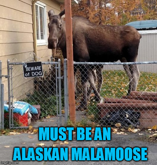 Weird | MUST BE AN ALASKAN MALAMOOSE | image tagged in dog,moose | made w/ Imgflip meme maker