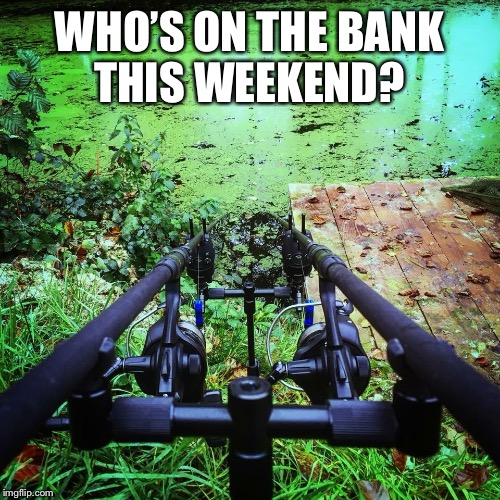 On the bank  | WHO'S ON THE BANK THIS WEEKEND? | image tagged in carp,fishing | made w/ Imgflip meme maker