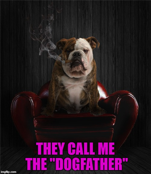 "THEY CALL ME THE ""DOGFATHER"" 