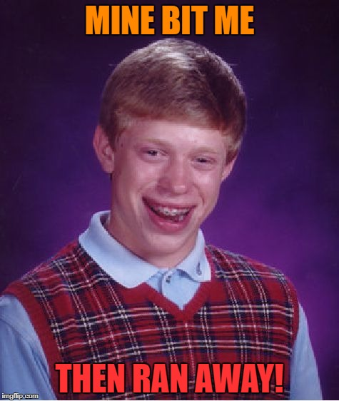 Bad Luck Brian Meme | MINE BIT ME THEN RAN AWAY! | image tagged in memes,bad luck brian | made w/ Imgflip meme maker