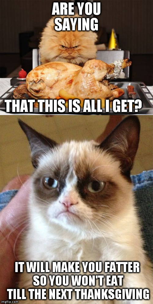 grumpy cat memes | ARE YOU SAYING THAT THIS IS ALL I GET? IT WILL MAKE YOU FATTER SO YOU WON'T EAT TILL THE NEXT THANKSGIVING | image tagged in thanksgiving,grumpy cat | made w/ Imgflip meme maker