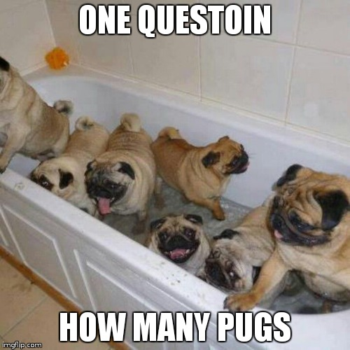 TO many pugs | ONE QUESTOIN HOW MANY PUGS | image tagged in pugs | made w/ Imgflip meme maker