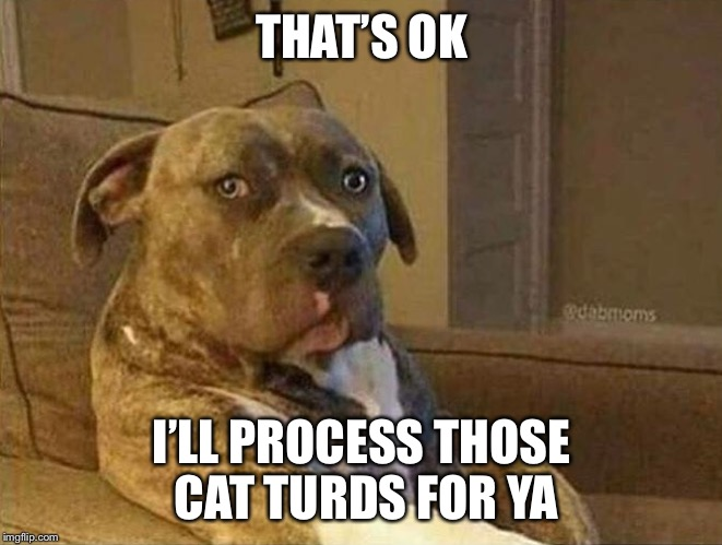 THAT'S OK I'LL PROCESS THOSE CAT TURDS FOR YA | made w/ Imgflip meme maker