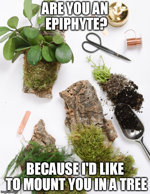 Are you an epiphyte? | ARE YOU AN EPIPHYTE? BECAUSE I'D LIKE TO MOUNT YOU IN A TREE | image tagged in pickup lines,plants,botany,pun | made w/ Imgflip meme maker