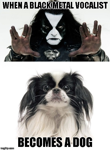 Never knew Black Metal could be so cute! | WHEN A BLACK METAL VOCALIST BECOMES A DOG | image tagged in memes,dogs,black metal,immortal,powermetalhead,cute | made w/ Imgflip meme maker