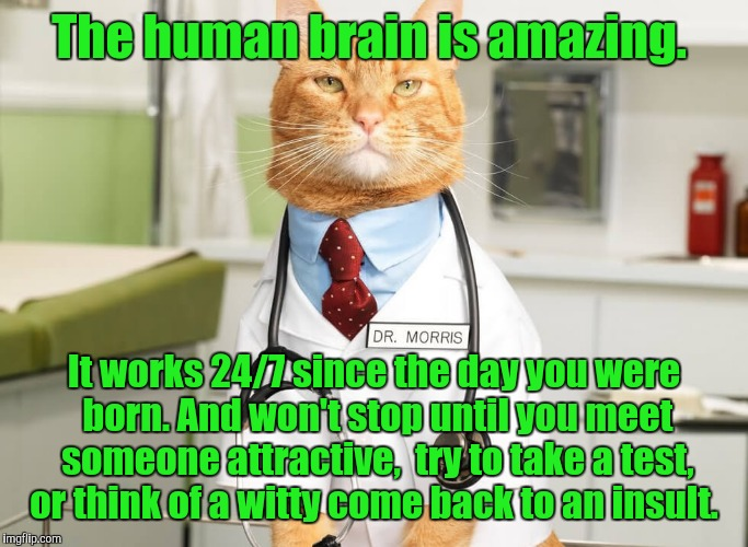 The human brain is amazing. It works 24/7 since the day you were born. And won't stop until you meet someone attractive,  try to take a test | image tagged in cat doctor | made w/ Imgflip meme maker