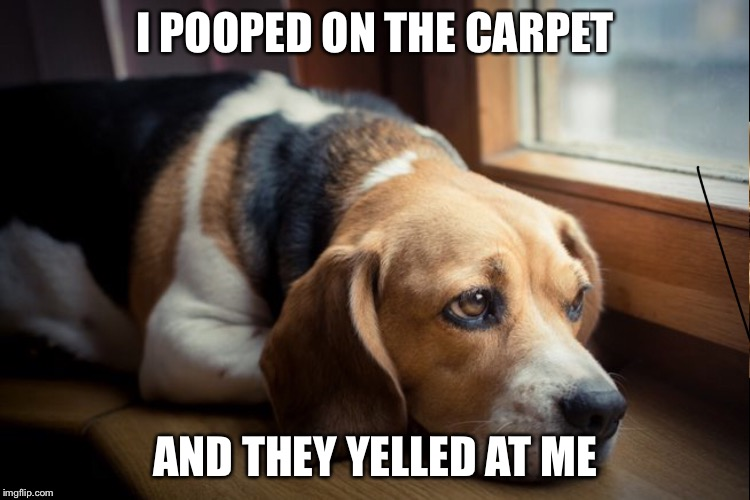 Sad dog | I POOPED ON THE CARPET AND THEY YELLED AT ME | image tagged in sad dog | made w/ Imgflip meme maker