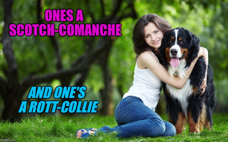 ONES A SCOTCH-COMANCHE AND ONE'S A ROTT-COLLIE | made w/ Imgflip meme maker