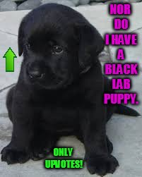 NOR DO I HAVE A BLACK LAB PUPPY. ONLY UPVOTES! | made w/ Imgflip meme maker