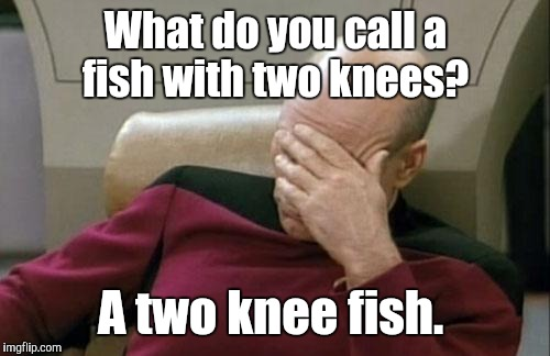 Captain Picard Facepalm Meme | What do you call a fish with two knees? A two knee fish. | image tagged in memes,captain picard facepalm | made w/ Imgflip meme maker