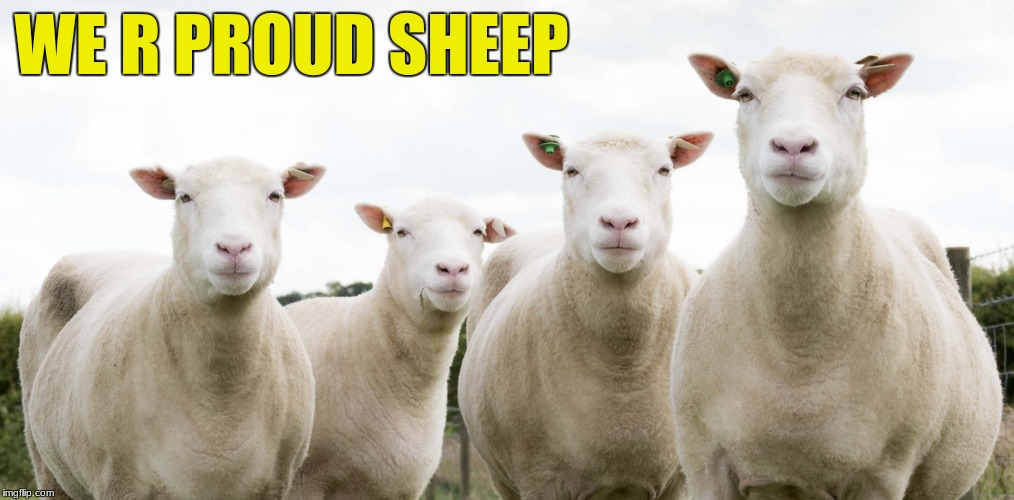 Sheep Pride | WE R PROUD SHEEP | image tagged in sheep,pride | made w/ Imgflip meme maker