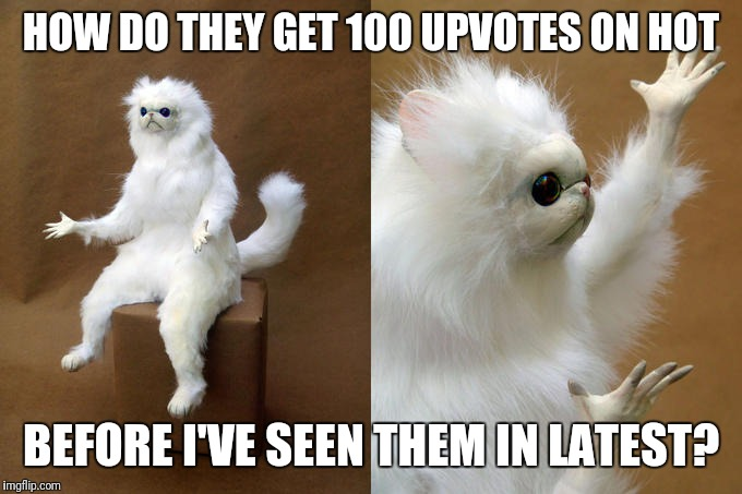 Persian Cat Room Guardian Meme | HOW DO THEY GET 100 UPVOTES ON HOT BEFORE I'VE SEEN THEM IN LATEST? | image tagged in memes,persian cat room guardian | made w/ Imgflip meme maker