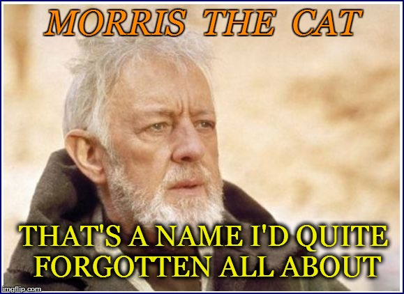 MORRIS  THE  CAT THAT'S A NAME I'D QUITE FORGOTTEN ALL ABOUT | made w/ Imgflip meme maker