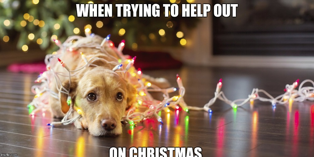 WHEN TRYING TO HELP OUT ON CHRISTMAS | image tagged in cute dog | made w/ Imgflip meme maker