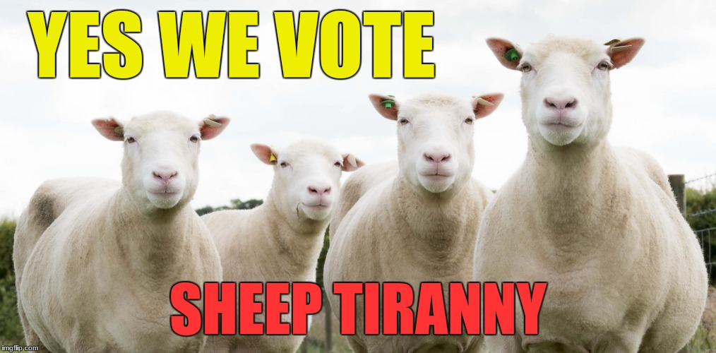 sheep | YES WE VOTE SHEEP TIRANNY | image tagged in sheep,tyranny | made w/ Imgflip meme maker