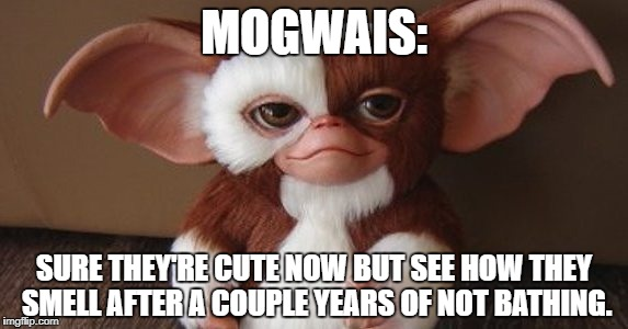 Smelly Bastards | MOGWAIS: SURE THEY'RE CUTE NOW BUT SEE HOW THEY SMELL AFTER A COUPLE YEARS OF NOT BATHING. | image tagged in gremlins,mogwai,gizmo,bath,stinky | made w/ Imgflip meme maker