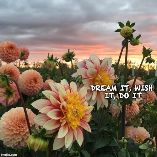 DREAM IT, WISH IT, DO IT | image tagged in flowers,beautiful vintage flowers,wish,spring | made w/ Imgflip meme maker