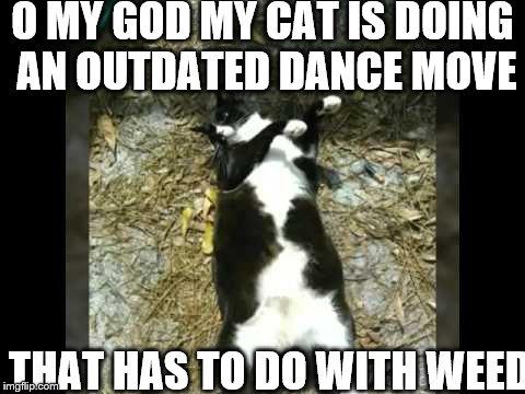 dab cat - Imgflip
