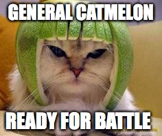 GENERAL CATMELON READY FOR BATTLE | image tagged in memes | made w/ Imgflip meme maker