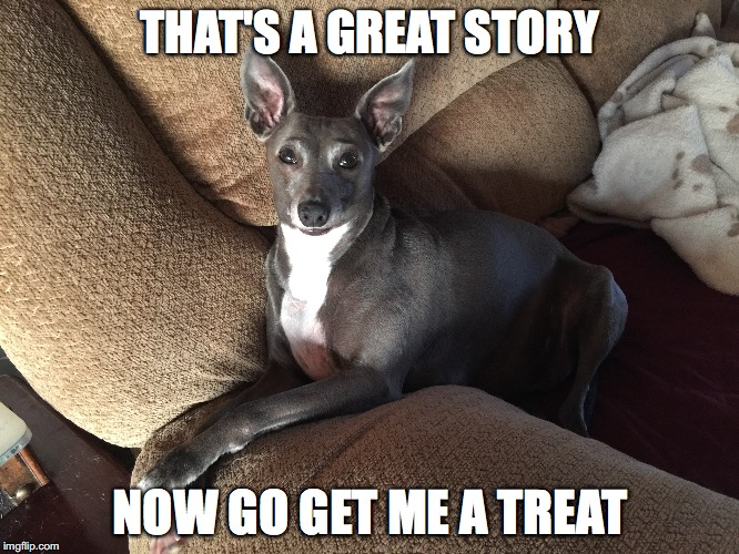 THAT'S A GREAT STORY NOW GO GET ME A TREAT | image tagged in funny dogs | made w/ Imgflip meme maker