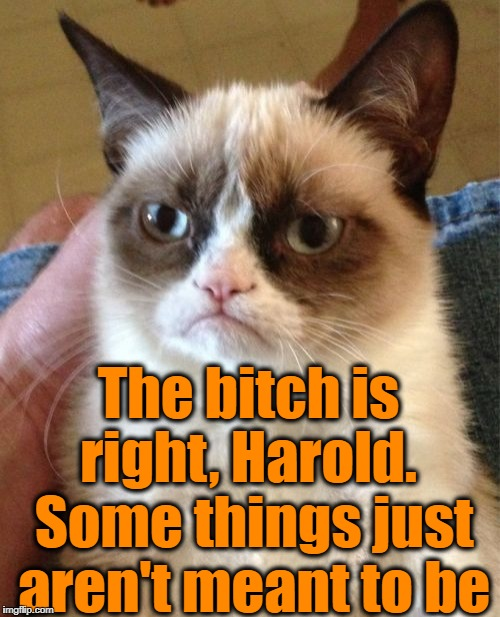 Grumpy Cat Meme | The b**ch is right, Harold.  Some things just aren't meant to be | image tagged in memes,grumpy cat | made w/ Imgflip meme maker