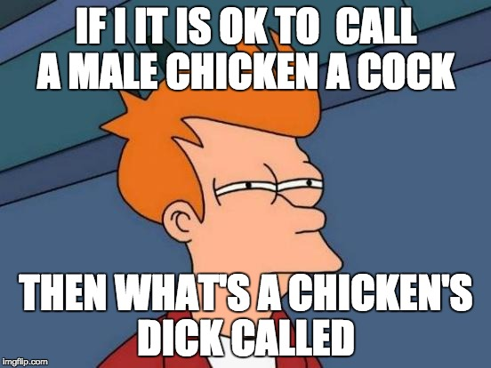 Futurama Fry Meme | IF I IT IS OK TO  CALL A MALE CHICKEN A COCK THEN WHAT'S A CHICKEN'S DICK CALLED | image tagged in memes,futurama fry | made w/ Imgflip meme maker
