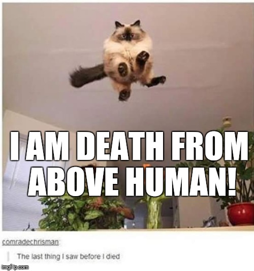 I AM DEATH FROM ABOVE HUMAN! | image tagged in cat | made w/ Imgflip meme maker