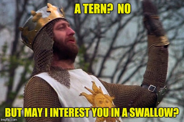 A TERN?  NO BUT MAY I INTEREST YOU IN A SWALLOW? | made w/ Imgflip meme maker