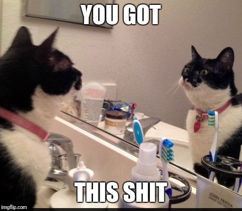 Motivational Cat | YOU GOT THIS SHIT | image tagged in motivational cat | made w/ Imgflip meme maker