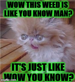 WOW THIS WEED IS LIKE YOU KNOW MAN? IT'S JUST LIKE WOW YOU KNOW? | image tagged in stoned kitten | made w/ Imgflip meme maker